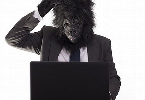 Gorilla on the computer