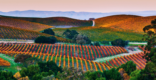 Napa_Valley_Header