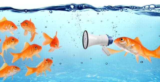 A goldfish announces the Aimclear conference schedule to a school of goldfish.